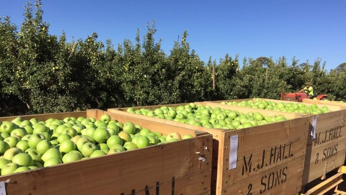 fruit bins at Ardmona