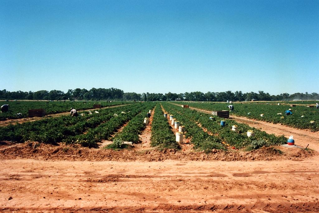 farm, Murchison, Victoria