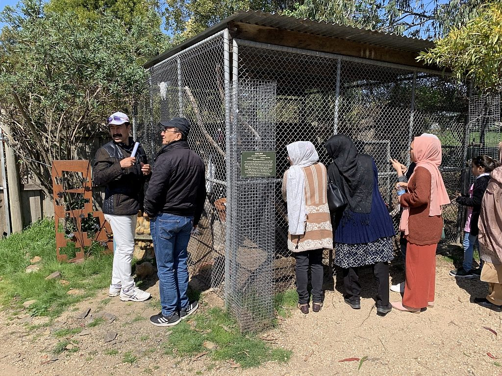at the Galah Enclosure, Mansfield Zoo