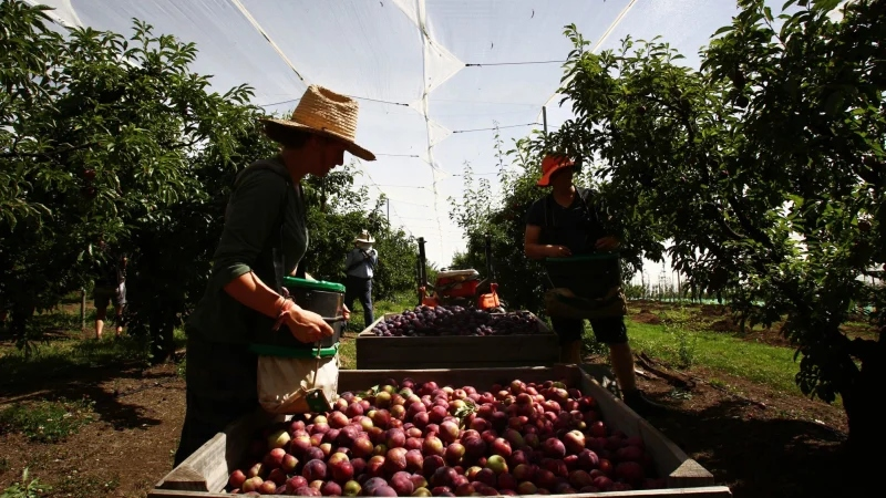Fruit and vegetable growers